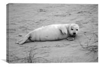 Sea Dogs., Canvas Print