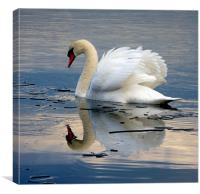 Swan on Ice, Canvas Print