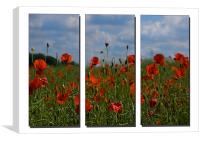 Poppy Triptych, Canvas Print
