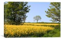 Canola Rape Seed Oil Fields and Spring Foliage, Canvas Print