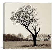 Naked and Vulnerable Leafless Tree, Canvas Print