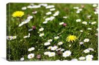 Wild Spring Flowers in Meadow, Canvas Print