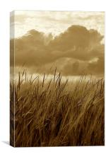 Sepia Barley Crop Growing Under Cloudy Sky Detail, Canvas Print
