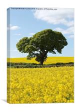 Green Tree in Bright Yellow Canola Rapeseed Fields, Canvas Print