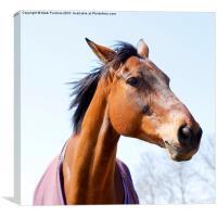 Elegant Chestnut or Bay Horse Head, Canvas Print