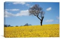 Unique Tree Alone in Yellow Rapeseed Fields, Canvas Print