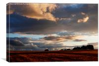 Cotswolds Barley Field & Sunset, Canvas Print
