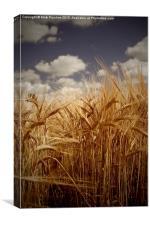 Tall Barley Crop Plant Detail Sepia, Canvas Print