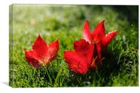 Beautiful Red Autumn / Fall Leaves, Canvas Print