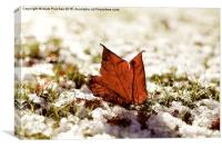 Last Autumn Leaf Standing in First Snow of Winter , Canvas Print