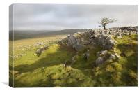 Malham Moor & Bordley, Canvas Print
