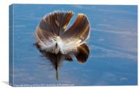 Feather, Canvas Print