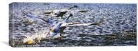 Flight of swans, Canvas Print