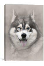 Siberian Husky 2, Canvas Print