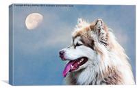 husky, Canvas Print