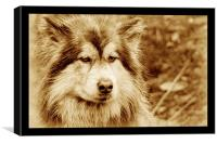 dog, Canvas Print