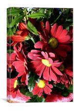 Mums Chrysanthemum, Canvas Print