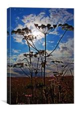 Cow Parsley, Canvas Print