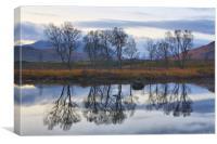 Birch Trees At Loch Ba, Canvas Print