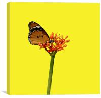 African Monarch Resting On Flower, Canvas Print