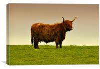 Hairy Cow, Canvas Print