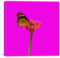 Butterfly In Shocking Pink!, Canvas Print