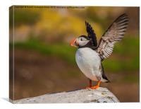 In A Flap, At Inner Farne!, Canvas Print