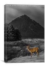 Deer Hind Selective Colour, Canvas Print