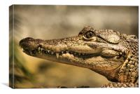 Morelot's Crocodile, Canvas Print