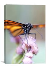 Butterfly, Canvas Print