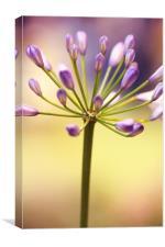 Floral 5, Canvas Print