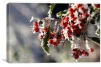 Winter Berries, Canvas Print
