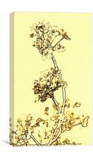 Delicate Blossom, Canvas Print