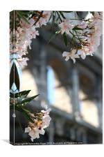 Flowers and Arches - Colloseum - Rome, Canvas Print