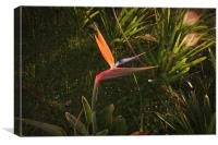 Crane Flower, Canvas Print