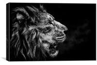 Lion Breath, Canvas Print