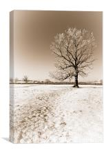 Frozen Sepia Tree, Canvas Print