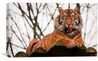 Tiger, Canvas Print