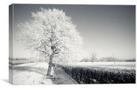 Frozen Tree, Canvas Print