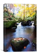 autumn brook, Canvas Print