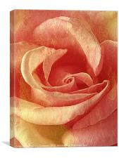 Rose textures (Strawberries & Cream)., Canvas Print