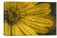 After The Rain., Canvas Print