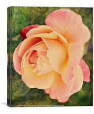 Pinkness Textured Rose., Canvas Print