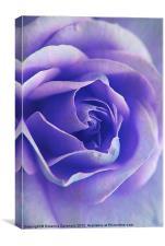 Blue Rose Textures., Canvas Print