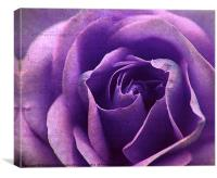 Purple BlueTextures Rose., Canvas Print