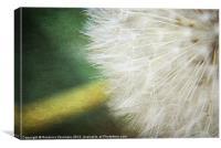 Dandelion Textures., Canvas Print