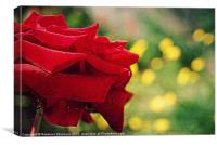 One Single Rose.., Canvas Print