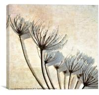 Frosty Hogweed., Canvas Print