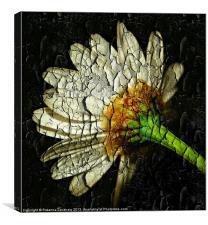 Margarite Texture., Canvas Print