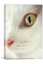 Feline Portraits., Canvas Print